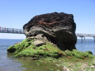 Rock of Bellingham Bay