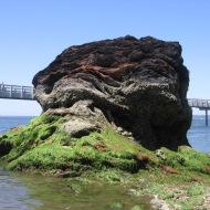 Rock of Bellingham Bay