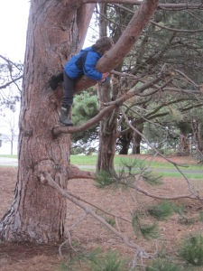 little boy in tree