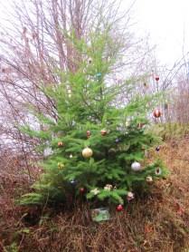 Christmas tree in Bellinbgham