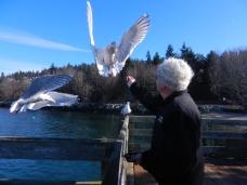 feeding the seagulls