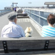 Pup and Owners enjoying the sun