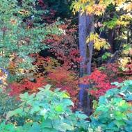 autumn at Lake Padden