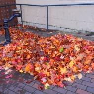 leaf drift