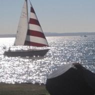 peppermint sail