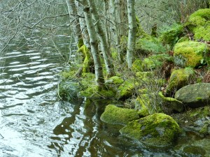 green Padden