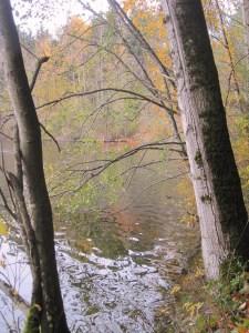 Padden trees
