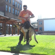 Stratus the Super Hero Dog