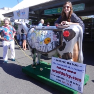 Vote for the cow!