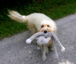 Elois and her toy elephant