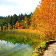 autumn reeds at Lake Padden