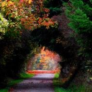 portal into autumn
