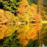 cropped-padden-reflection1.jpg