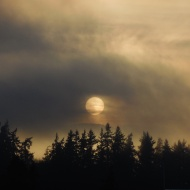 sun through the fog in Bellingham