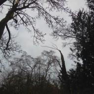 tree tops (2)