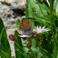 Blue Butterfly on Baker