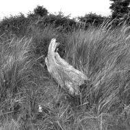 driftwood in grass