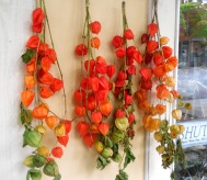 Red Tomatillos