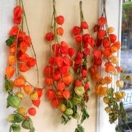 Red Tomatillos