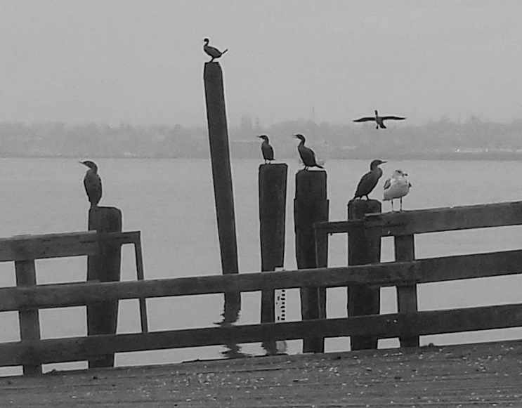 bird party in black and white
