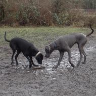 Moose and Kekoa