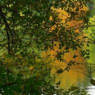 Padden autumn (2)