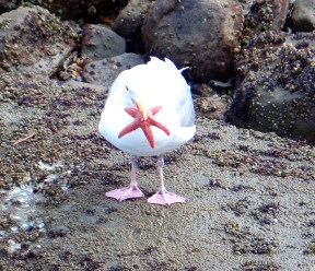 seagull and seastar