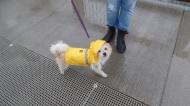 Virginia in her raincoat