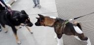Beser meets Roxy