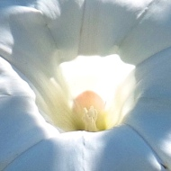 center of a marigold (photo by Karen Molenaar Terrell)