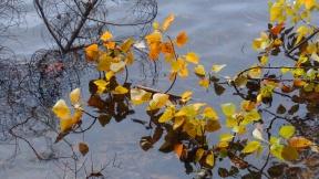 Autumn Leaves on Lake Padden