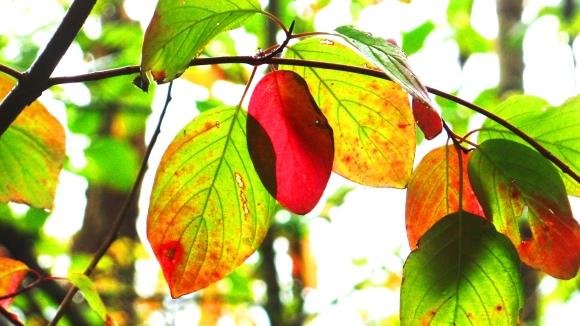 Autumn Leaves at Lake Padden (Karen Molenaar Terrell)