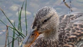 Duck Face (Karen Molenaar Terrell)