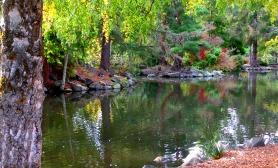 Point Defiance Autumn Reflection