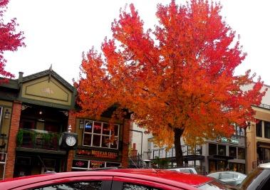 Red Bellingham