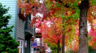 Autumn in Fairhaven