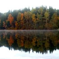 Morning mist on Lake Padden, Bellingham, WA. (photo by Karen Molenaar Terrell)