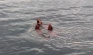 Otters and fish. Photo by Karen Molenaar Terrell.