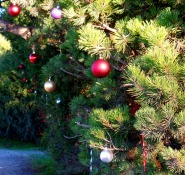Christmas decorations on the way to Boulevard Park