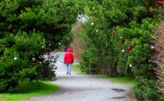 Christmas walk to Boulevard Park