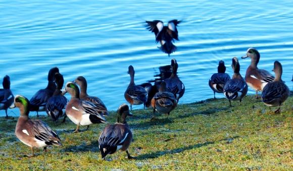 Duck Party (photo by Karen Molenaar Terrell)