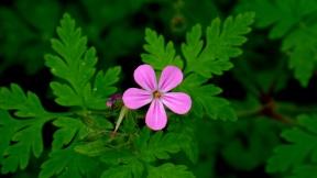 Little Purple Flower (photo by Karen Molenaar Terrell)