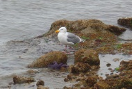 Seagull and Seastar