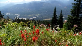 Indian Paintbrush on Sauk Mountain