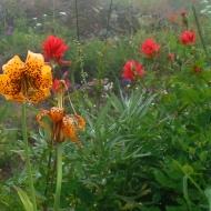 Sauk Mountain Flowers