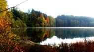 Padden Reflection