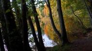 Autumn Reflection Betwen Trees