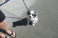 R2D2 pup