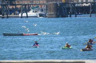 Kayaks and Seagulls