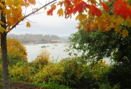 bellingham bay autumn